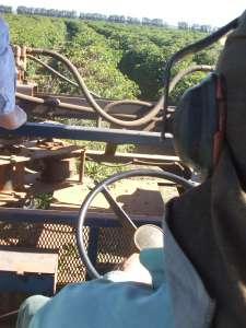 機械収穫するのもブラジルの特徴 -