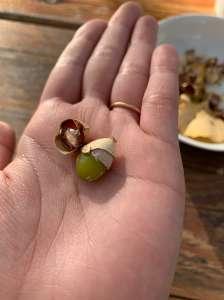 畑日記 vol.6: さて、お味はいかが?/ Taste of Ginkgo seeds -